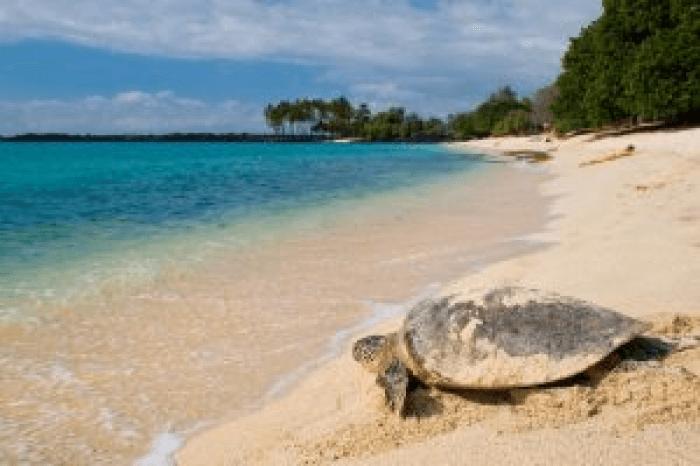 Turtle beach in hawaii