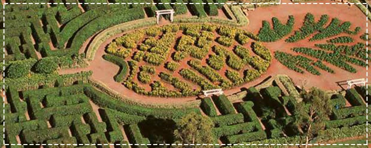 Find Your Way Around the Dole Pineapple Maze